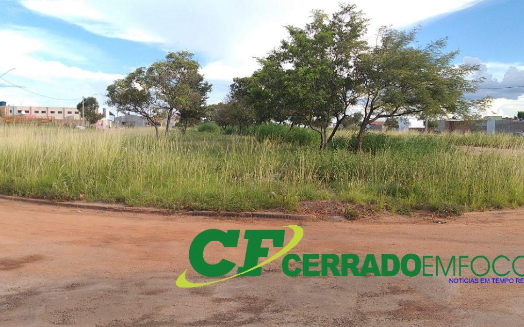 LEM: Matagais tomam conta de diversos pontos do Parque São José e Cidade Universitária