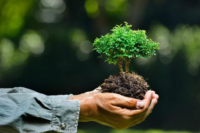Brasil: Dia da Ecologia