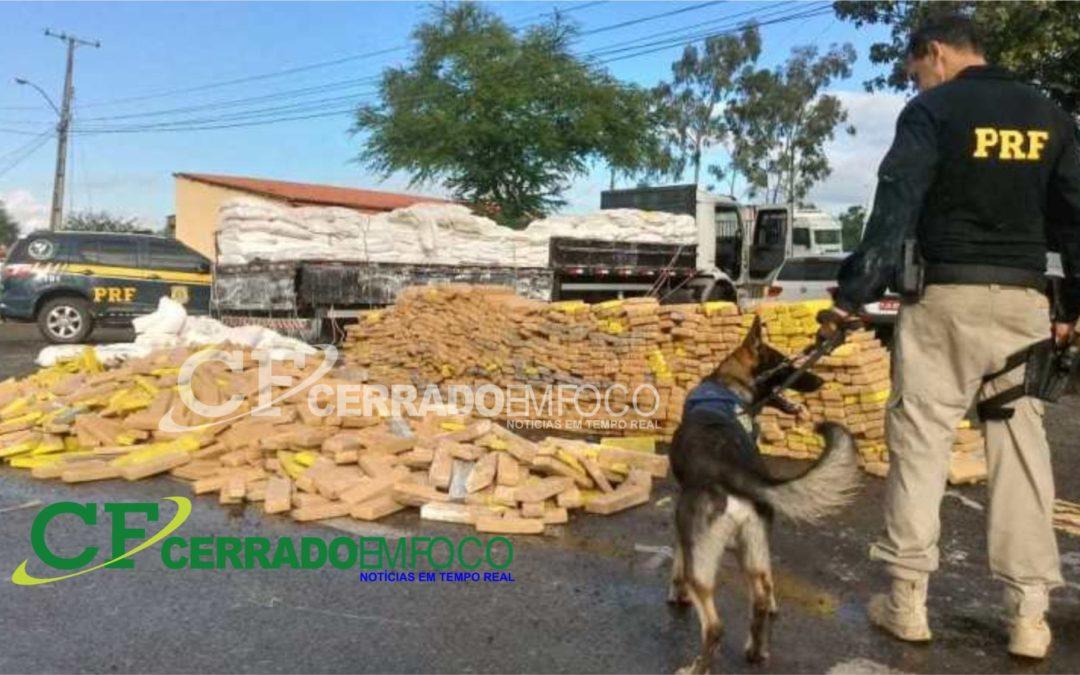 Bahia: Operação Copa América 2019; Mais de 3 toneladas é apreendida com o auxílio do cão farejador do Grupo de Operações com Cães da PR