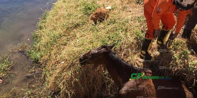 Barreiras: Corpo de Bombeiros resgata animal as margens do Rio Grande