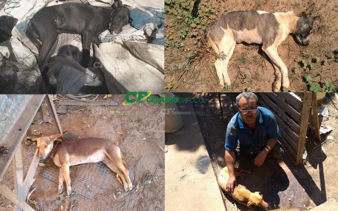 LEM: Quatro cachorros são envenenados e três morrem no Novo Paraná