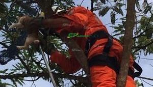 Barreiras: Bombeiros resgatam gato em árvore de mais de 10 metros de altura